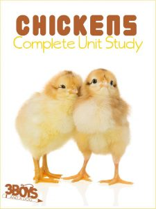 Chickens Complete Unit Study for Homeschooling and Afterschooling