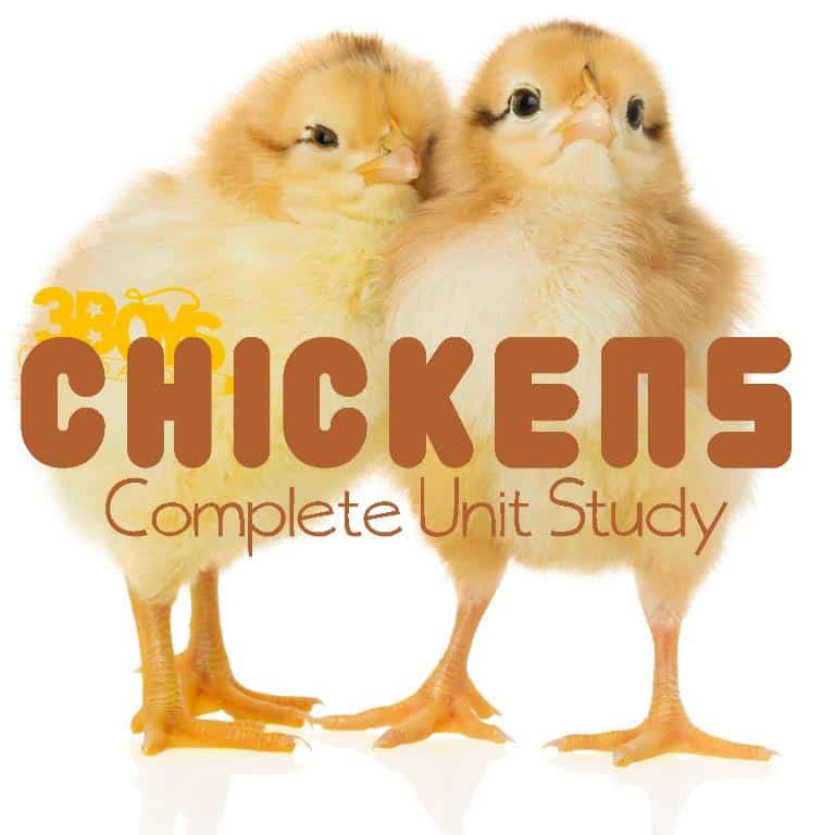 Homeschooling Freebies: Chickens Complete Unit Study – 3 ...