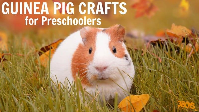 Guinea Pig Crafts for Preschoolers to Make