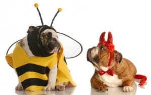 9 Costumes to Help Fido Celebrate Halloween