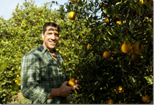 Interview with Tropicana and Orange Grower Eduardo Pines