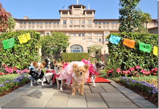 """Beverly Hills Chihuahua 3: Viva La Fiesta!"""