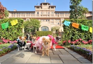 Hotel Review:  Langham Huntington Pasadena Hotel (Dog Friendly)
