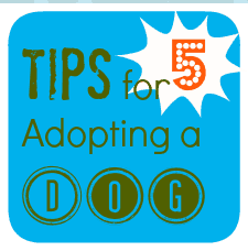 5 Practical Tips for Adopting a Dog