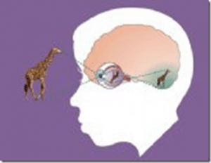 FREE: Curriculum guides on eye health and the science of vision! #hsbloggers