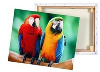 CanvasParrots_thumb[1]