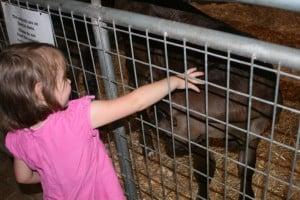 Deanna Rose Farm 6-12 003