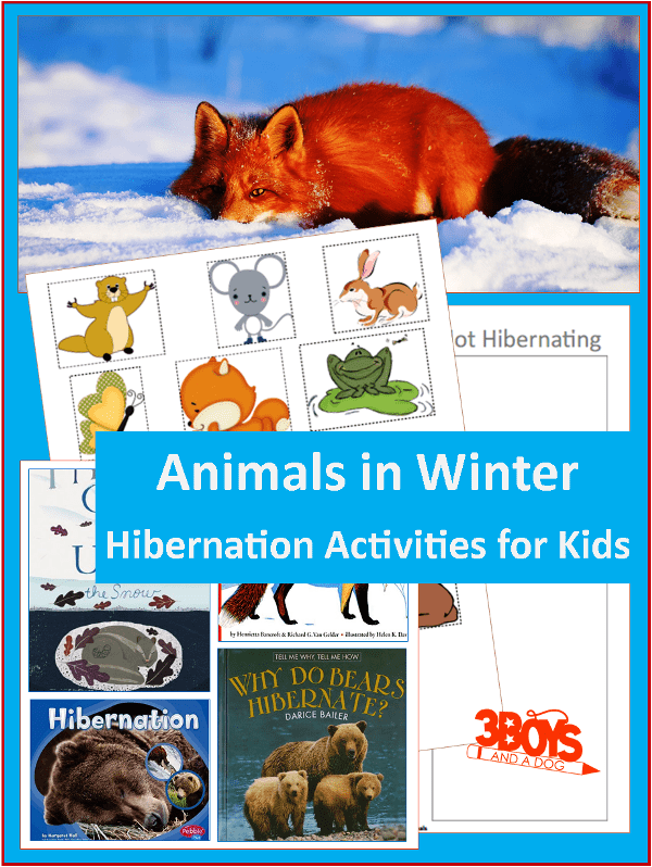 Animals in Winter Hibernation Activities for Kids