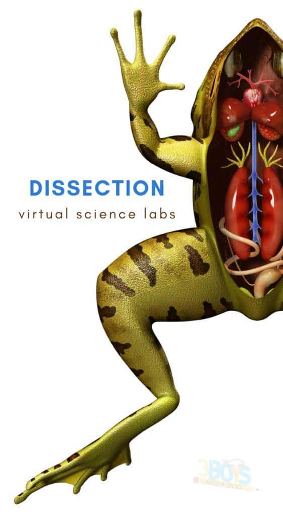 virtual dissection labs for homeschoolers