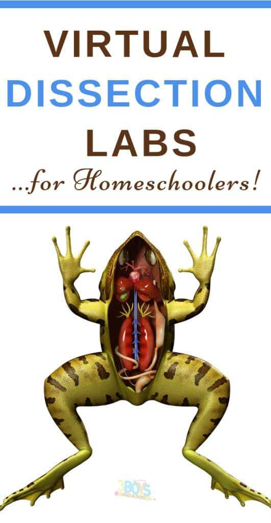 virtual labs for homeschooling dissection for science
