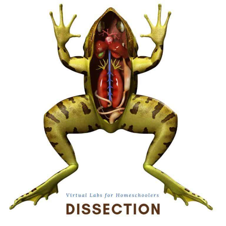 dissection virtual science labs