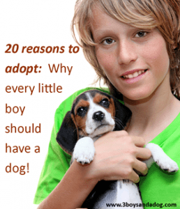 20 Reasons Why You Should Adopt a Pet!