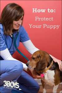 How To: Protect Your Puppy