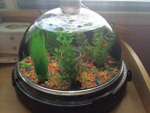 BioBubble (Aquatic) Review! (NYC)