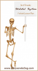 Learn the Skeletal System {Grade Three Unit Study}