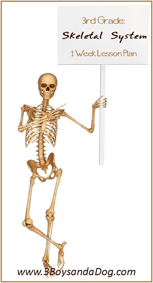 Learn the Skeletal System