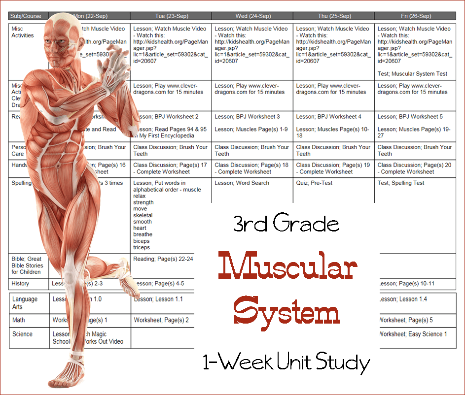 Muscular System Lesson Plans