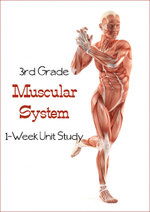 Learn the Muscular System {Third Grade Unit Study}