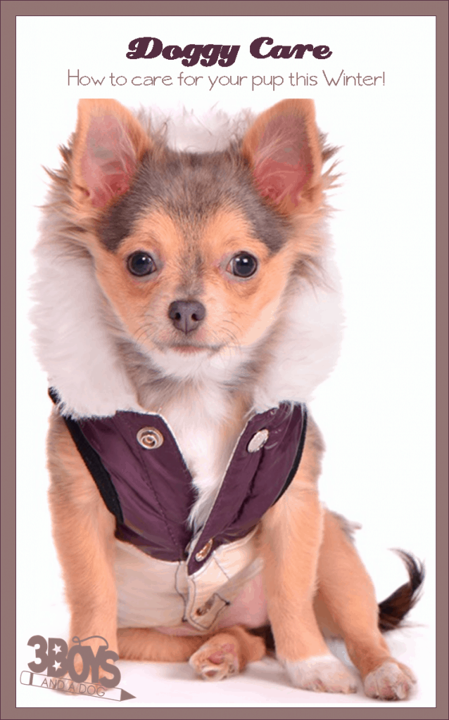 Winterize Your Dogs