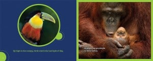 all_in_a_rainforest_day_9780991233700_spread_1