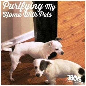 Purifying My Home With Pets