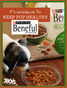 5 Ways to Keep Your Dog Healthy