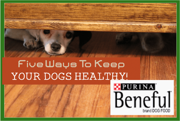 5 Ways to Keep Your Dogs Healthy