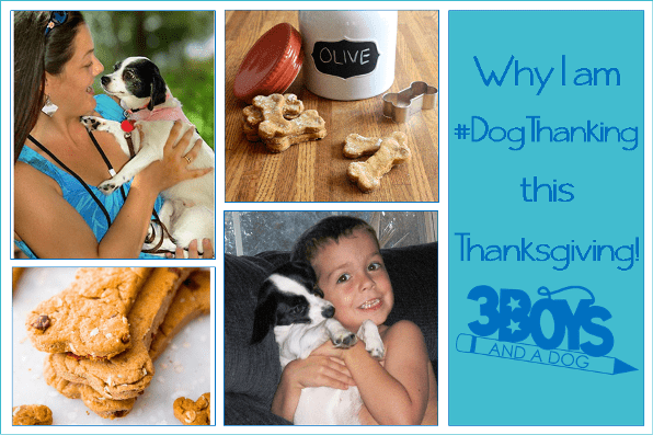 Thank Your Dog with These 7 DIY Dog Treats!
