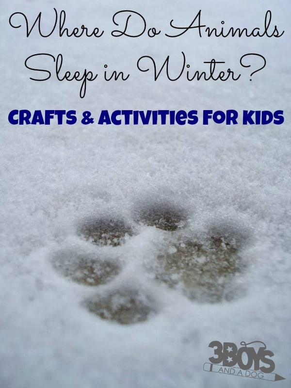 Where Do Animals Sleep in the Winter Crafts and Activities for Kids