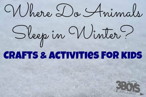 Where Do Animals Sleep in the Winter Crafts and Activities