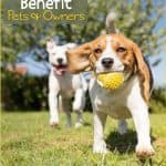 The Beneful Dream Dog Park Project: Building Community Between Pets and People