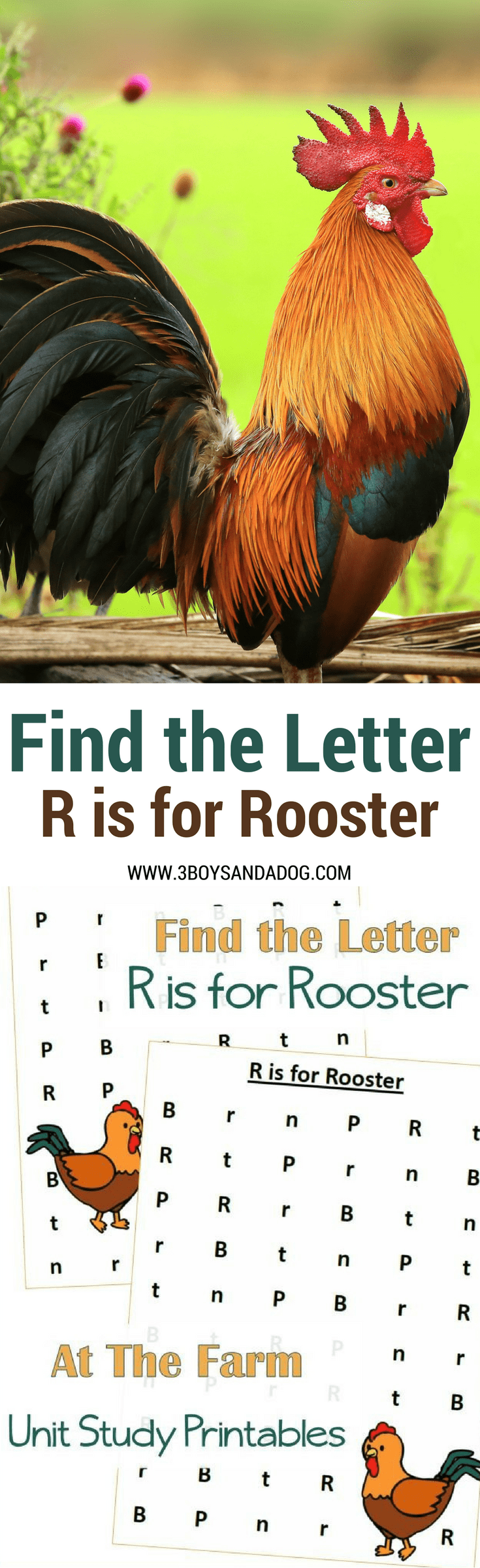 These Find the Letter Printables: R is for Rooster will help your preschool and early-elementary aged children work on recognizing the letter H among many other letters of the alphabet. Great for fine motor and alphabet recognition.
