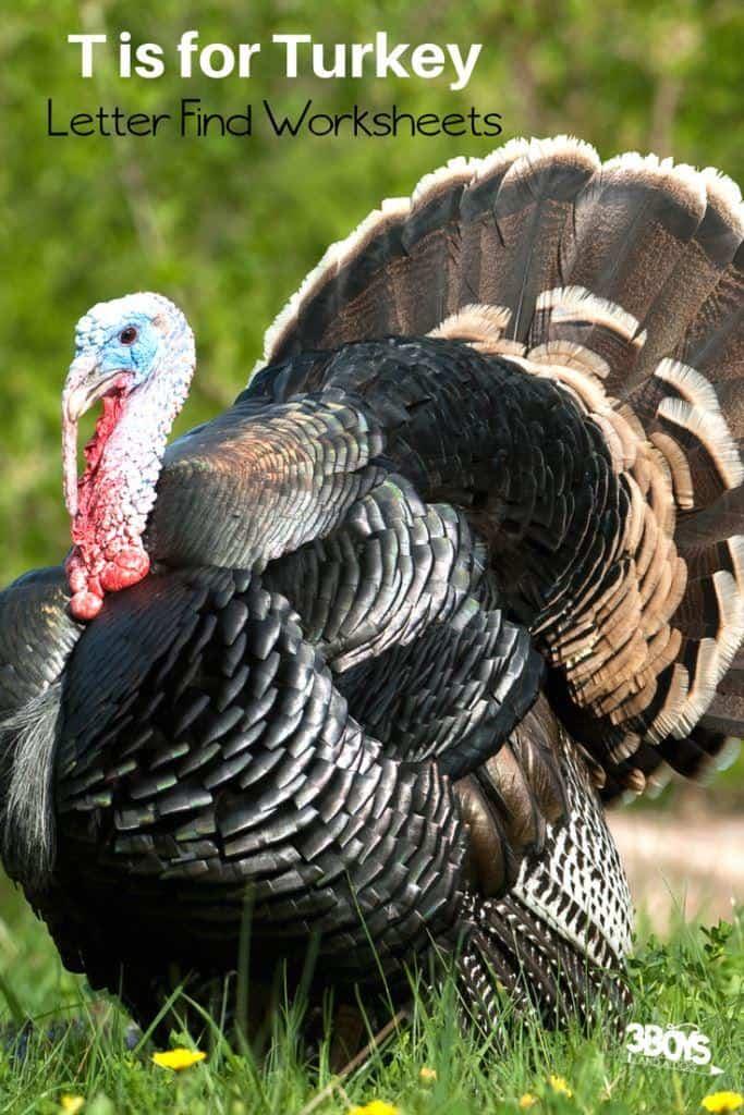 t is for turkey letter find worksheets