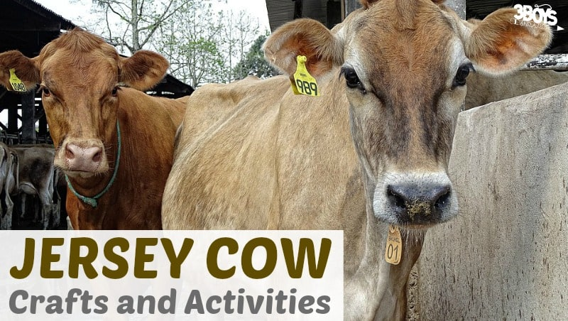 Jersey Cow Crafts and Activities for Kids