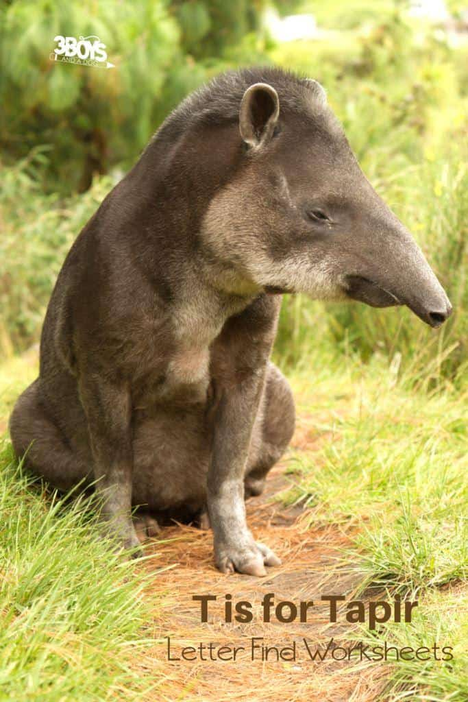 t is for tapir letter find worksheets