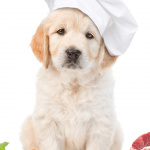 what human foods can my dog eat