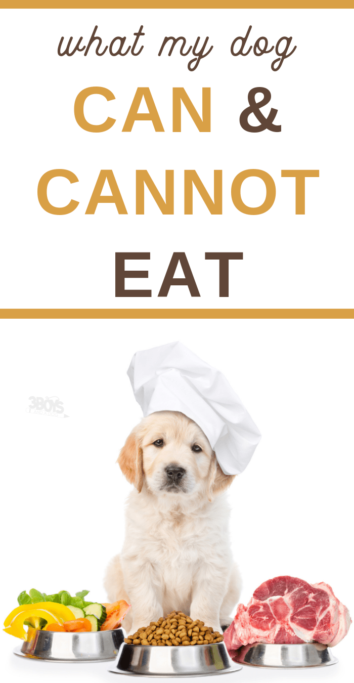 ultimate guide to what dog can and cannot eat