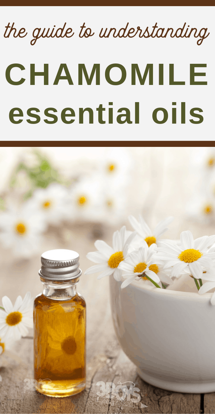 ultimate guide to chamomile oils