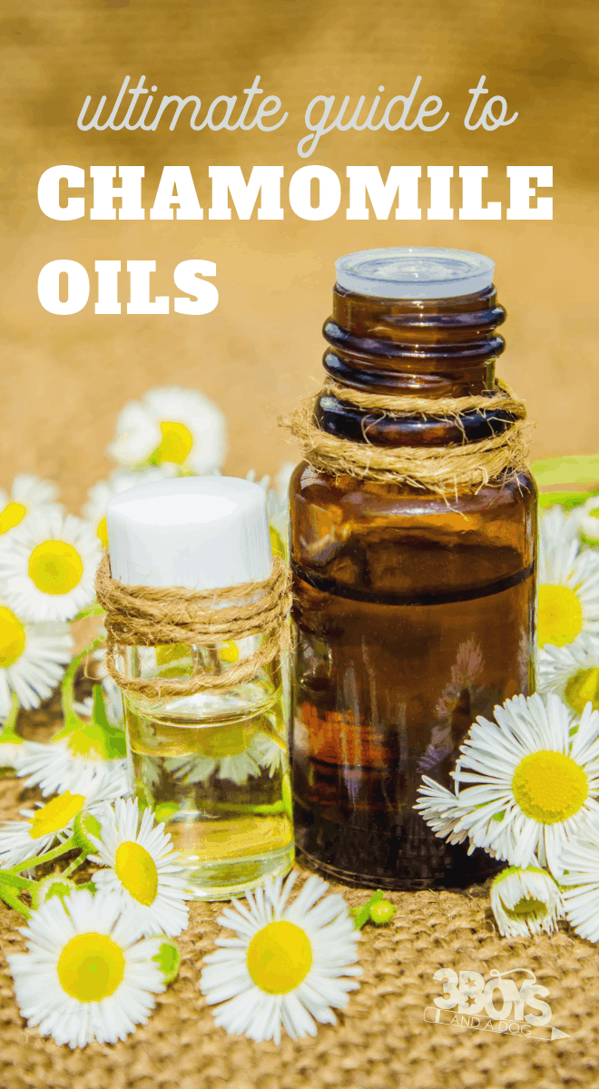 chamomile oils guide including differences between roman and german