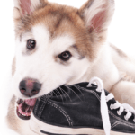 how to stop your dogs from chewing everything