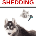 how to stop your dogs from constantly shedding