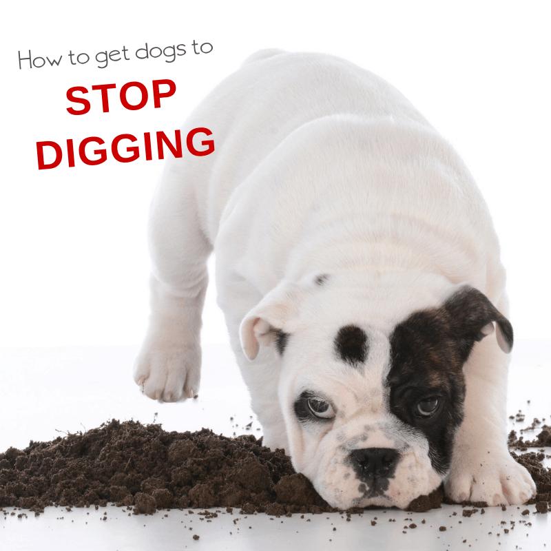 how to stop dog digging behavior
