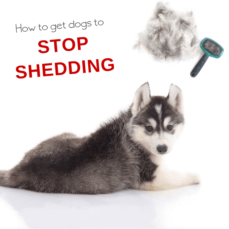 my puppy sheds everywhere tired of dog hair