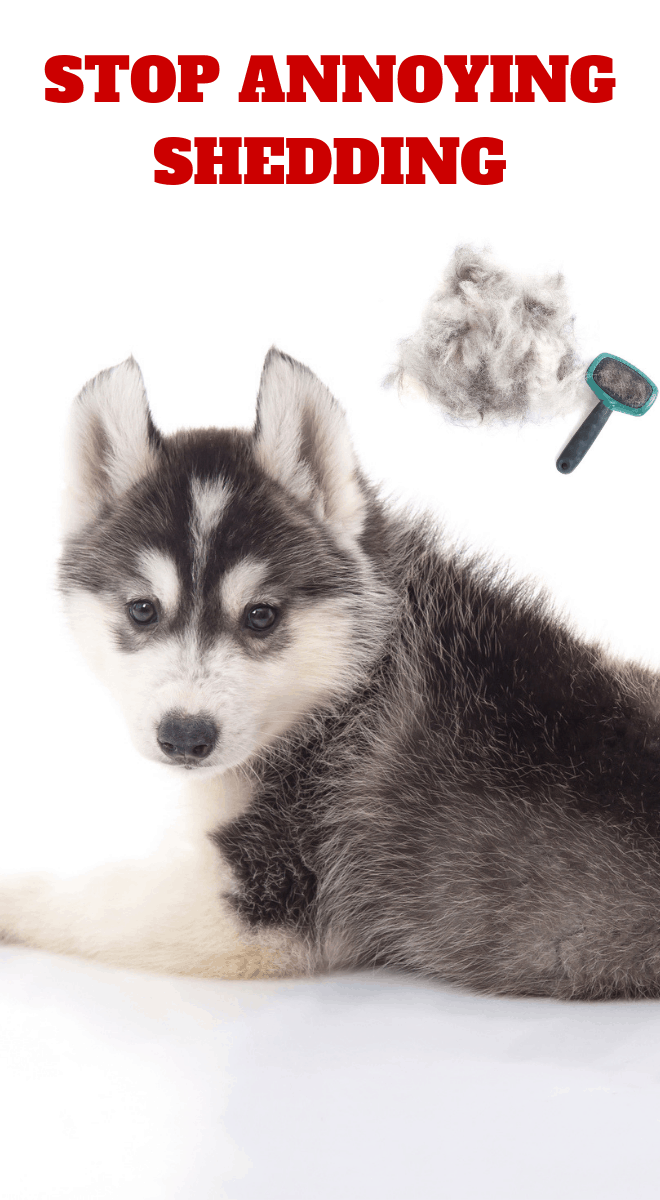 how to stop dog fur from shedding