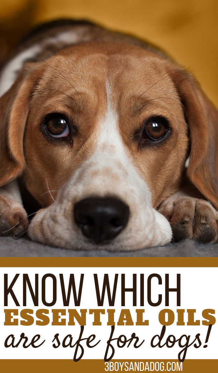 do you know which essential oils are unsafe for your pets