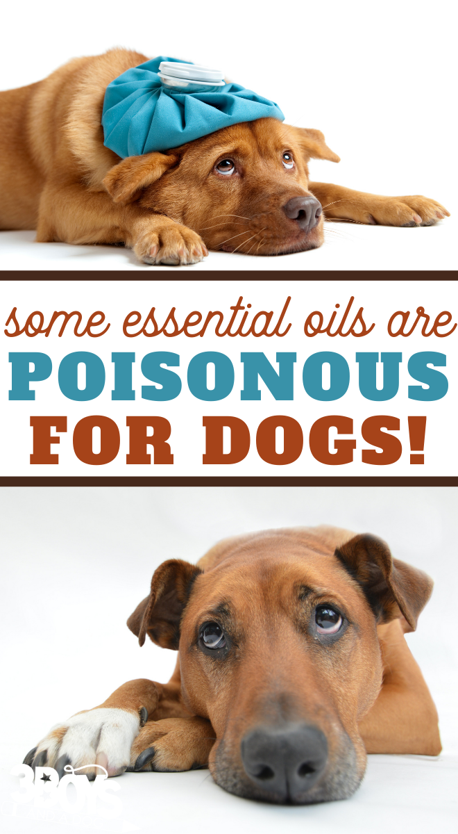 which essential oils are safe to be used around your doggo
