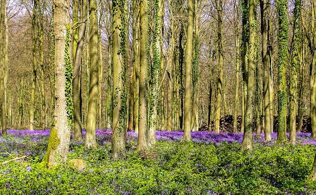 UK Forestry Field Trip