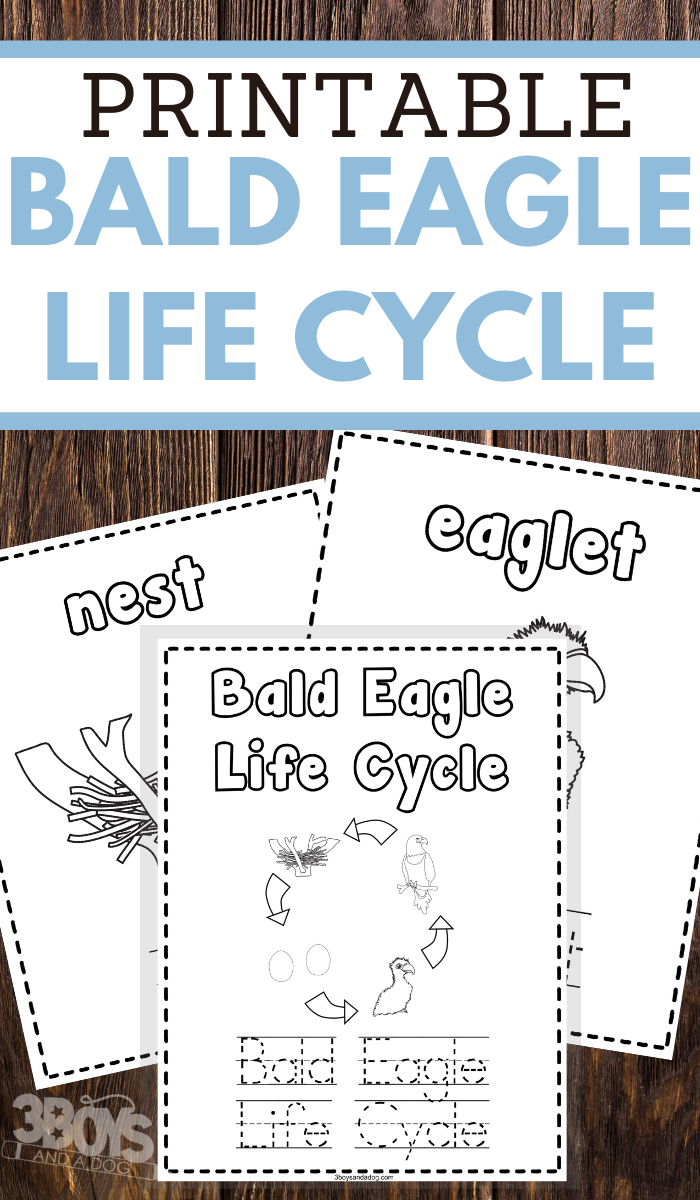 preschoolers bald eagle life cycle coloring and handwriting worksheets