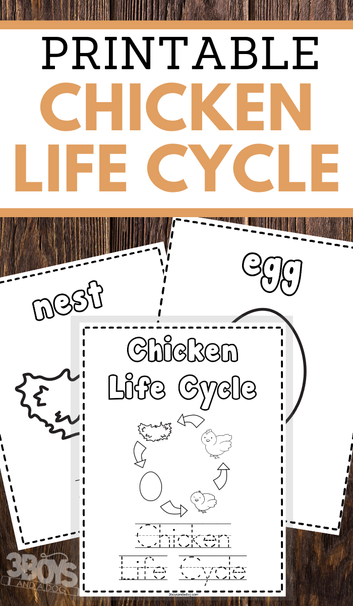 preschoolers chicken life cycle coloring and handwriting worksheets