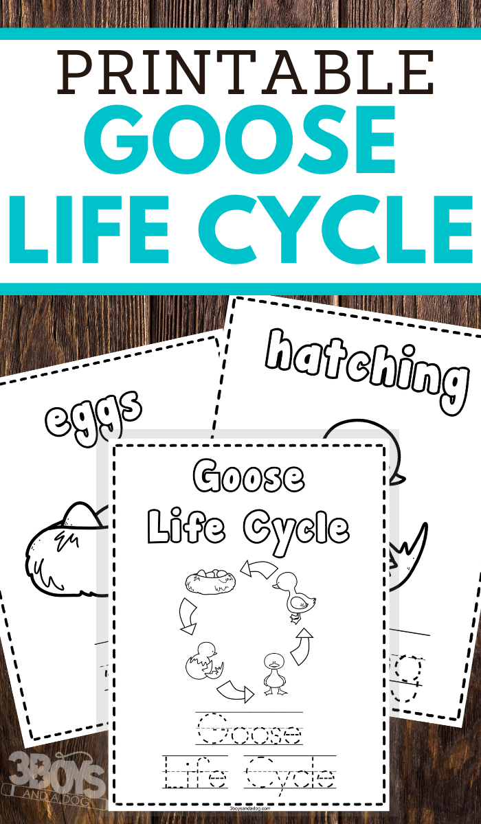 help your young children learn the life cycle of a goose or gander while practicing pencil grip handwriting and fine motor